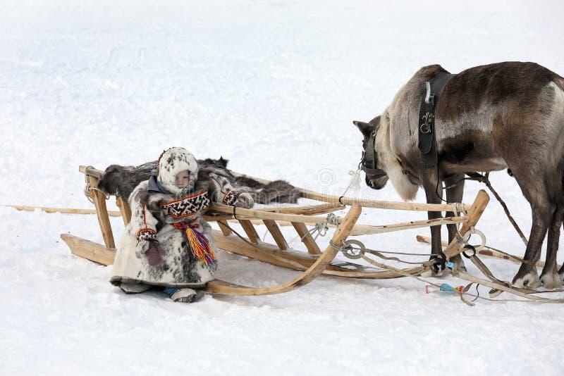 Baby reindeer herder in the Yamal Peninsula in winter near reindeer stock images