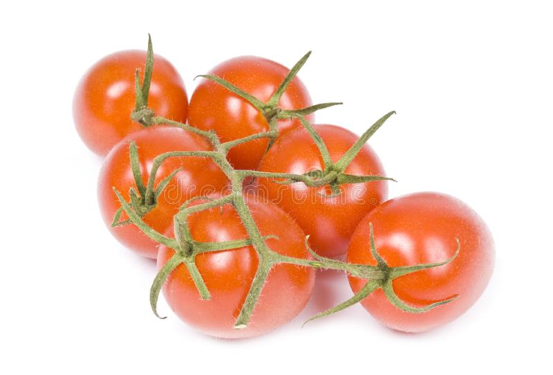 Baby Roma Tomatoes stock image