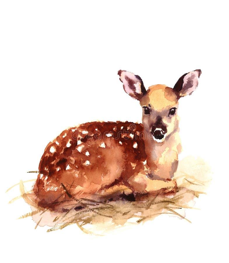 Baby-Rotwild-Aquarell Fawn Animal Illustration Hand Painted lizenzfreie abbildung