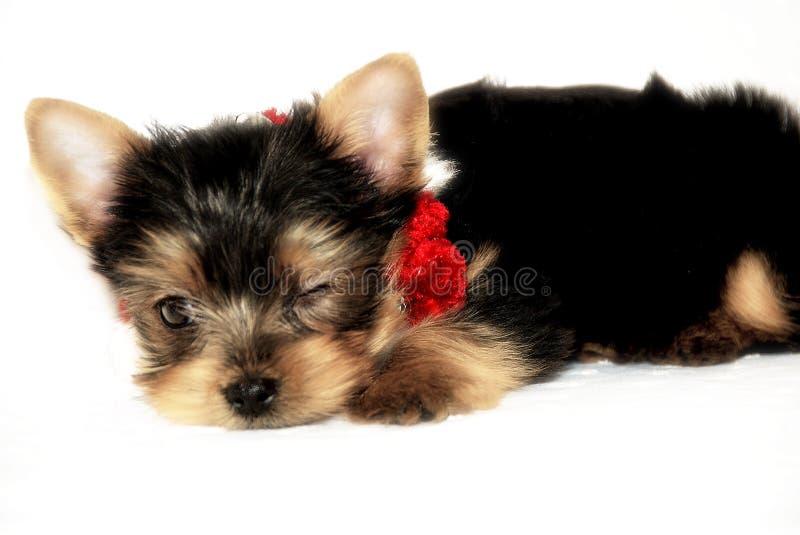 Baby Rudy 3 stock fotografie