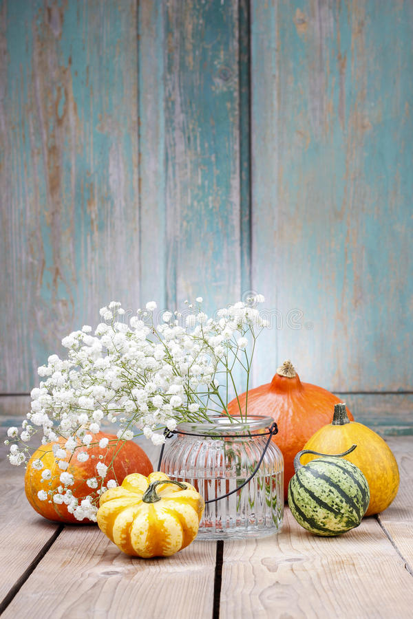 Download Baby's Breath (gypsophilia Paniculata) And Colorful Pumpkins Stock Photo - Image: 43775374