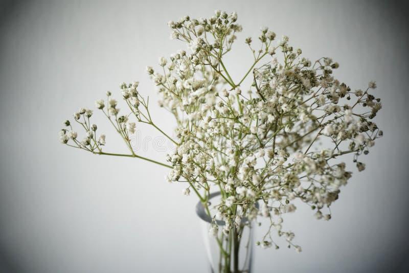 Baby& x27; s oddechu kwiaty obrazy royalty free