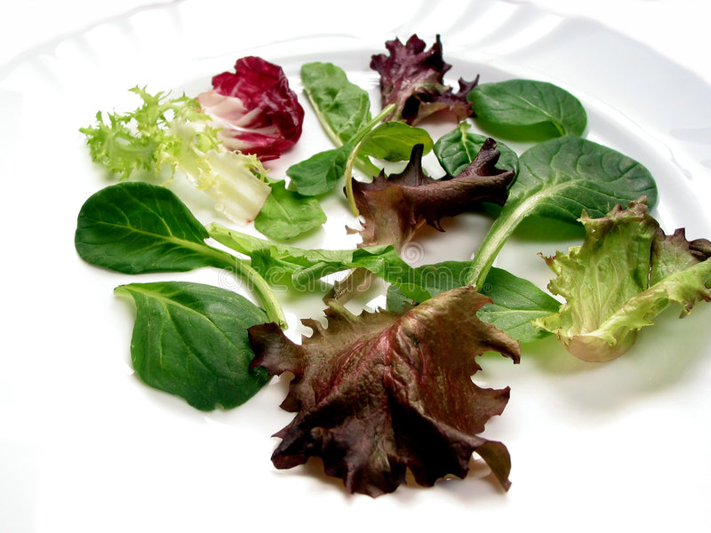 Baby salad greens 3 royalty free stock photography
