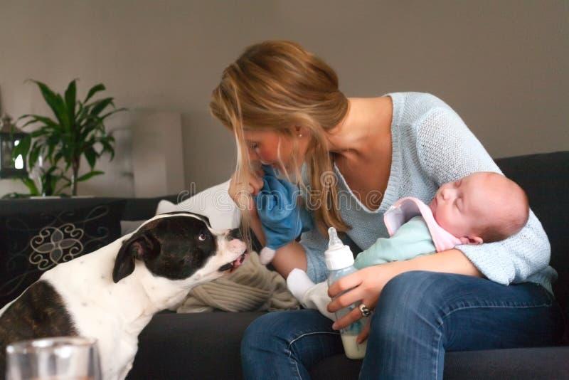 Baby schläft und der Hund ist nicht lizenzfreies stockfoto
