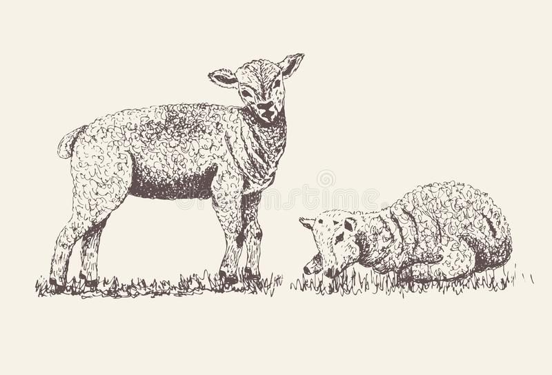 Baby Sheep, Lamb silhouette for print or poster on grey background royalty free illustration