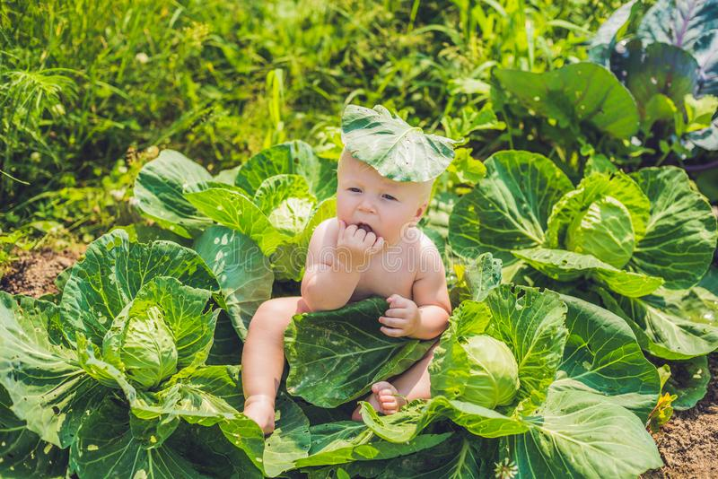 A baby sitting among the cabbage. Children are found in cabbage.  royalty free stock images