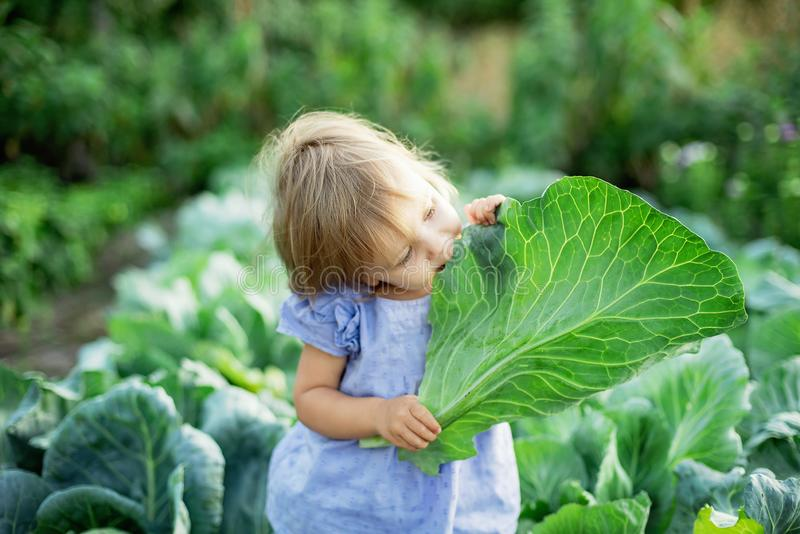 Baby sitting in cabbage plant. Cute little girl on cabbage field stock image