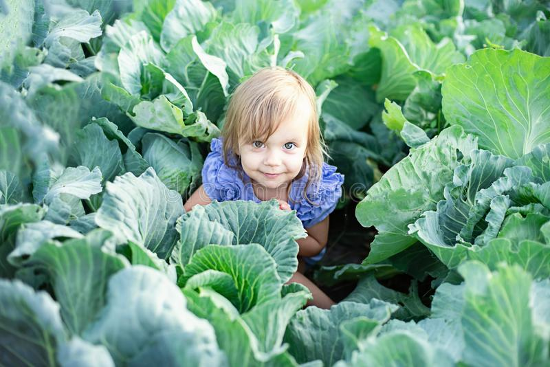 Baby sitting in cabbage plant. Cute little girl on cabbage field stock photo