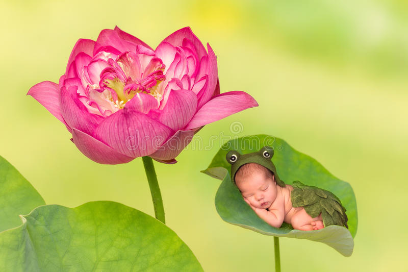 Baby sleeping on lotus leaf. 7 days old newborn baby in frog outfit sleeping on a leaf of a real lotus nelumbo flower royalty free stock photography