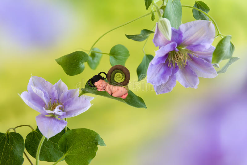 Baby snail on clematis flower. Newborn baby in felted snail outfit sleeping on a clematis flower royalty free stock images