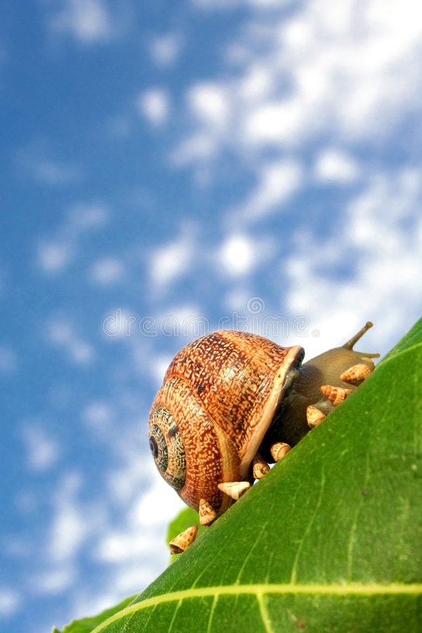 Download Baby snails going home stock image. Image of trend, funny - 5865739