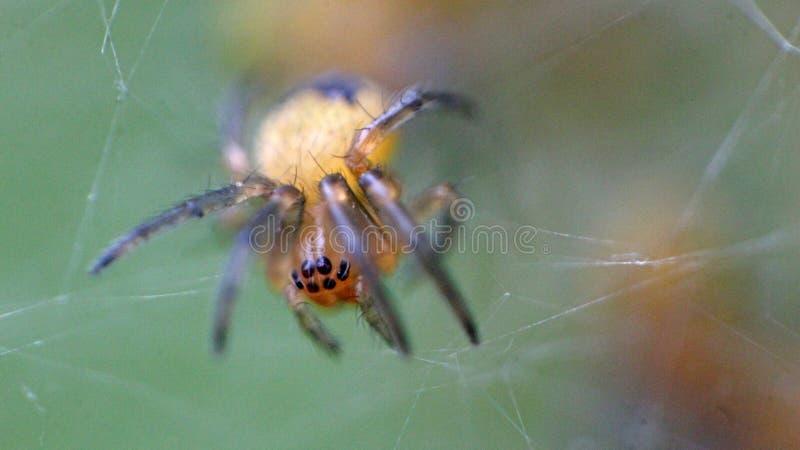 Baby spiders nest stock photos