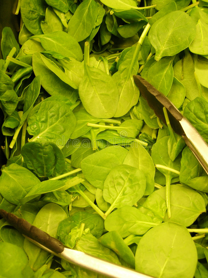 Baby Spinach. A bin full of baby spinach and tongs stock photos