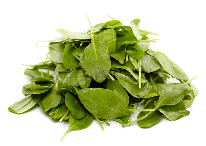 Download Baby spinach stock photo. Image of ingredient, nobody - 37242722