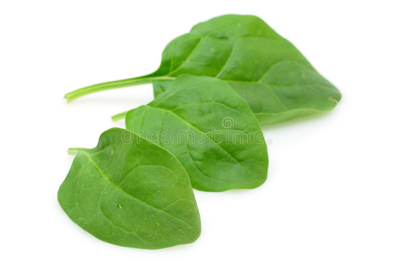 Download Baby spinach leaves stock photo. Image of vegetable, nature - 7116620
