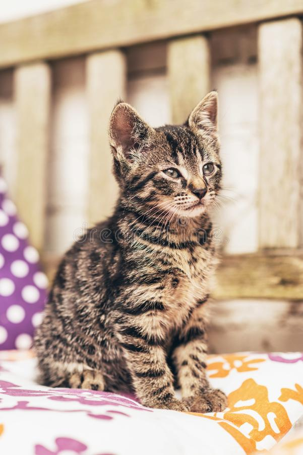 Baby striped tabby kitten on a colorful cushion royalty free stock image