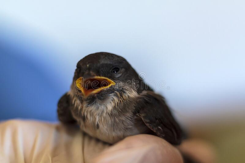 Baby Swallow With Open Mouth Being Fed With A Syringe ...