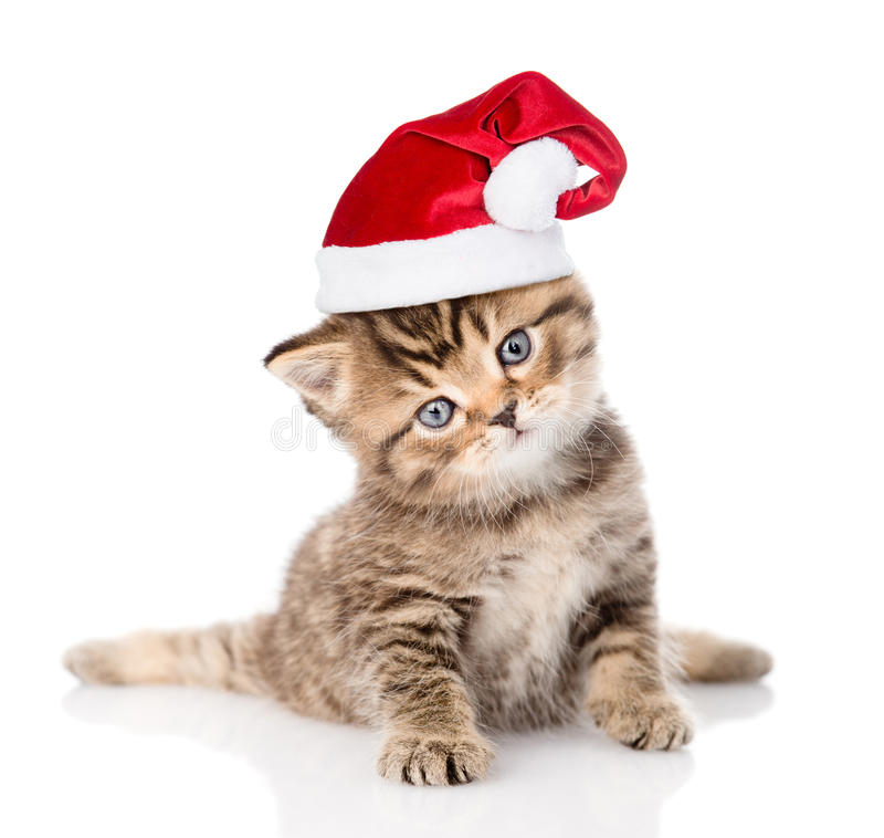 baby tabby kitten in red christmas hat. isolated on white stock photography