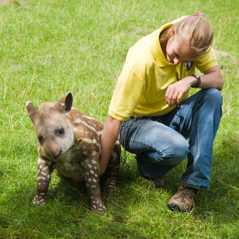 Download Baby tapir in Linton Zoo editorial photography. Image of captivity - 22454287