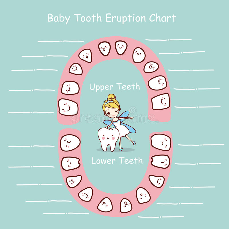 Baby Tooth Chart Eruption Record Stock Vector - Image: 70470818