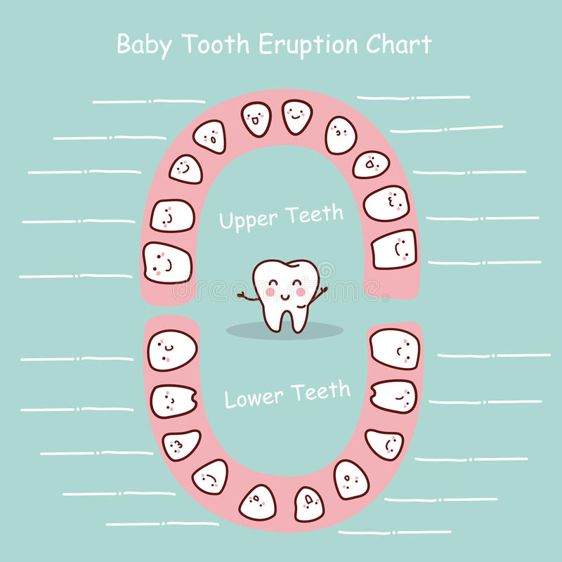 Baby tooth chart record stock illustration