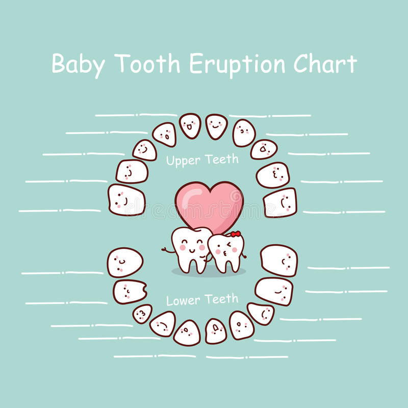 Baby tooth chart record. Baby tooth chart eruption record, great for health dental care concept stock illustration