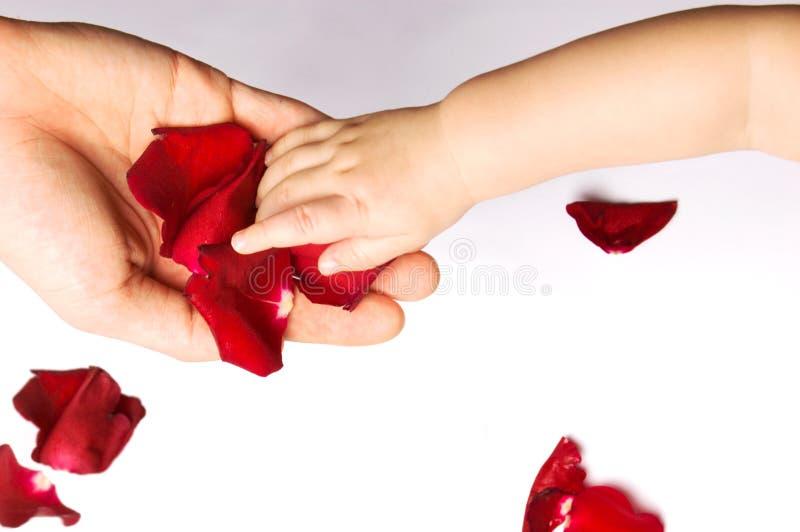 Download Baby Touching Rose Petals Royalty Free Stock Photos - Image: 8494678