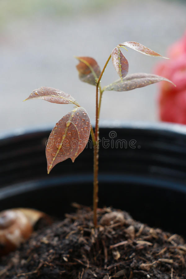 Baby tree. A growing baby tree in morning fresh stock images