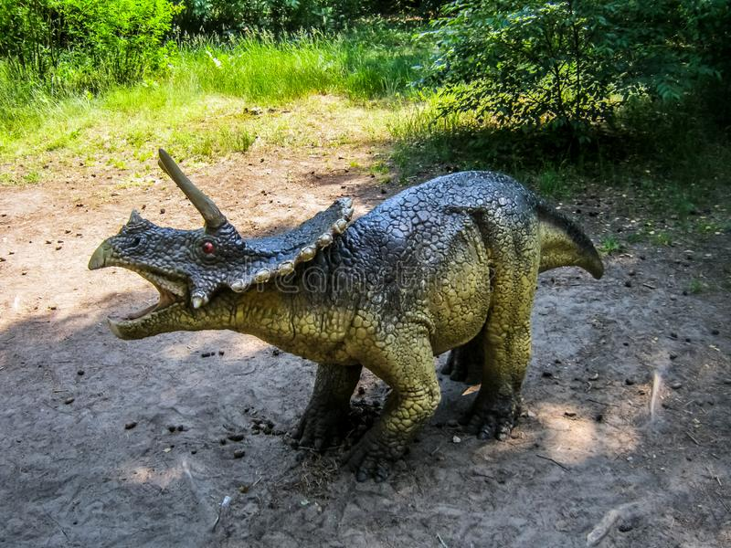 Baby Triceratops in the forest.  royalty free stock photography