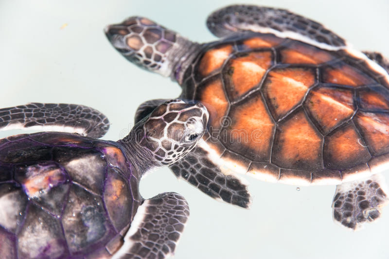 Download Baby turtle stock photo. Image of nature, baby, meal - 20890182