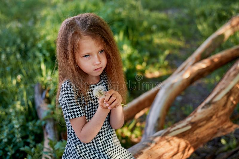 Baby 4 years, with blue eyes, small curls. A wonderful time of childhood and adventure. Warm sunlight.Holding a royalty free stock photography