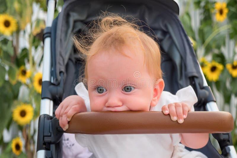 Babyfahrzeuge Baby, das im Spaziergänger mit Sonnenblumen auf Hintergrund sitzt Sitzende und Wartemutter Nettes Schätzchen stockfoto