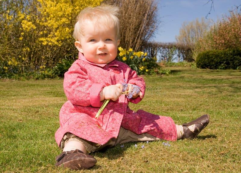 Babygartenblumen stockfotos