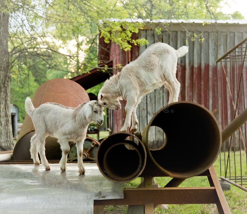 Babygeiten die op landbouwbedrijf spelen royalty-vrije stock foto