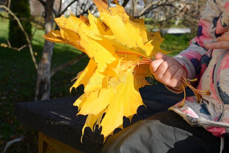 Babygirl e folhas de outono fotos de stock
