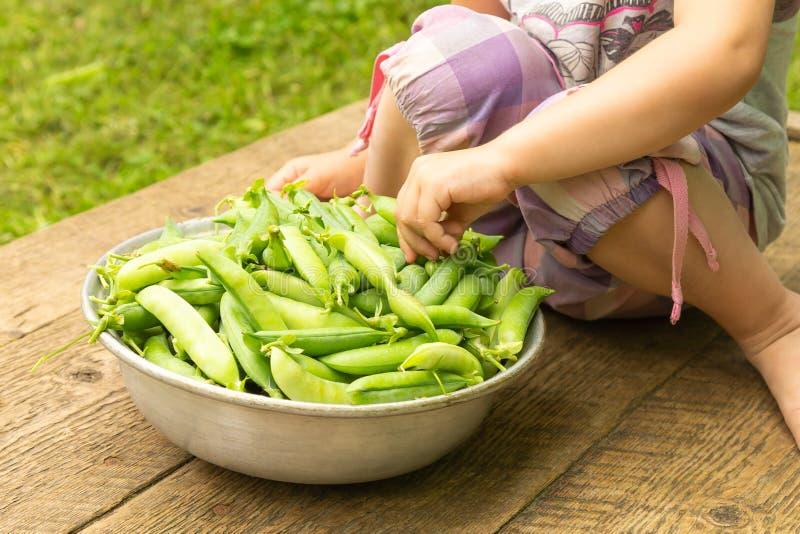 Babyhand, die voll Erbsenhülse von einer Schüssel reifen grünen Erbsen nimmt lizenzfreies stockbild