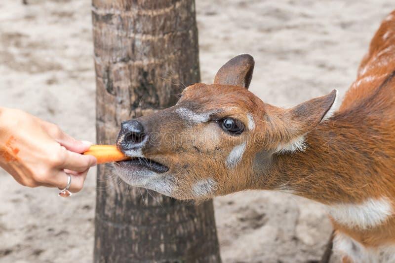 Babyherten in de Dierentuinpark van Bali, Indonesië Sluit omhoog royalty-vrije stock foto's