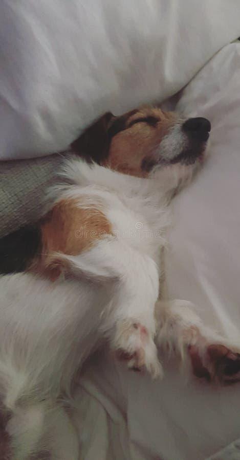 Babyhond stock fotografie