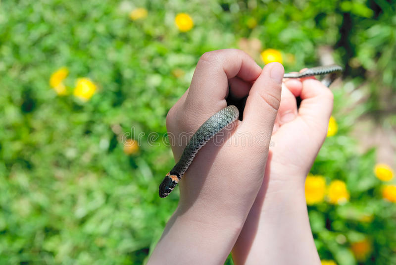 babyish змейка руки травы стоковые фотографии rf