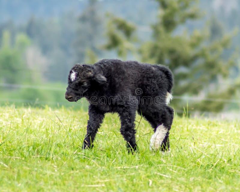 Babyjakken het Lopen royalty-vrije stock foto