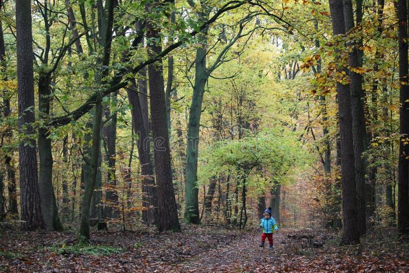 Babyjongen die door het de herfstbos lopen royalty-vrije stock afbeelding