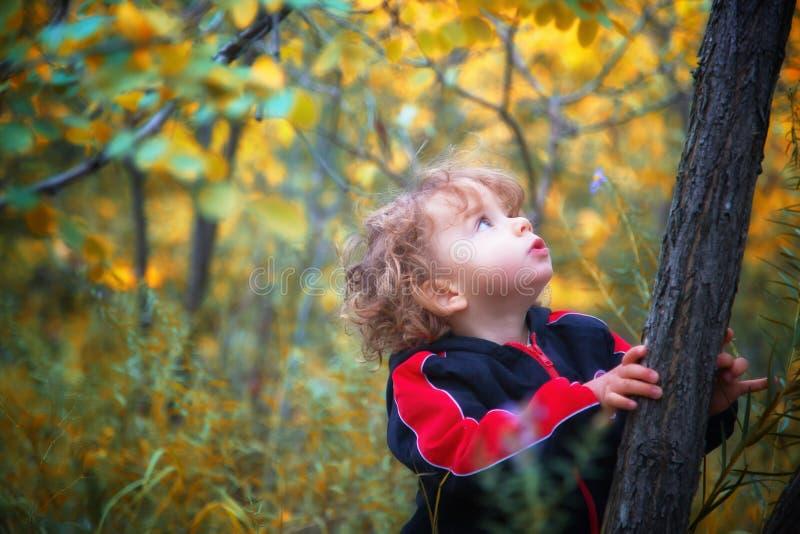 Babyjongen in het hout stock afbeelding