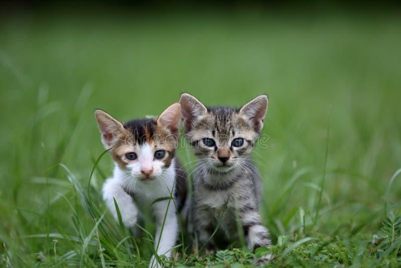 Babykat royalty-vrije stock fotografie