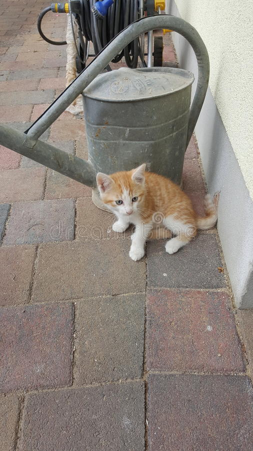 babykat buiten royalty-vrije stock afbeelding