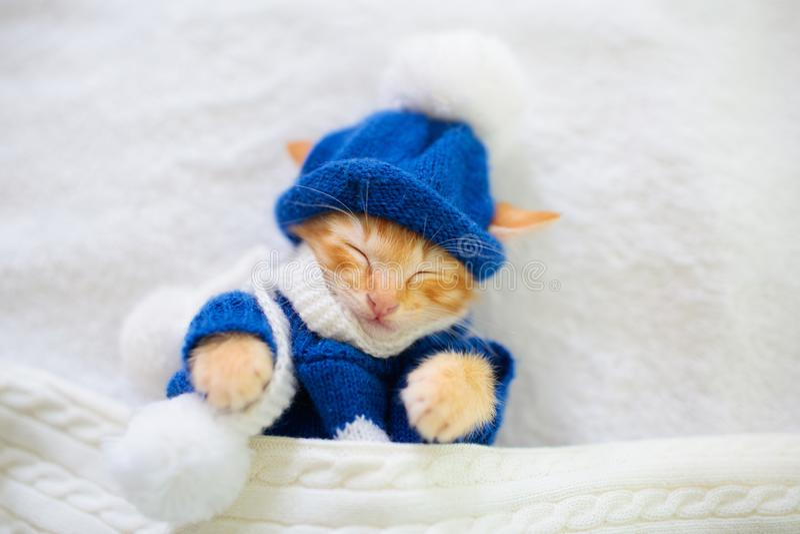 Babykat in sweater en hoed katjesslaap stock foto