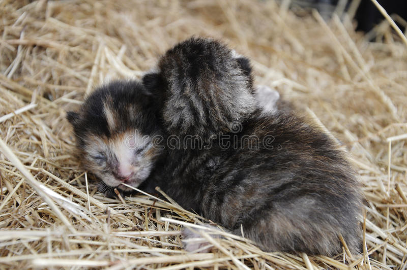Babykatjes stock foto's