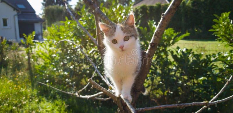 Babykatt i ett träd fotografering för bildbyråer