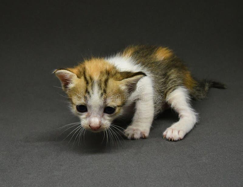 Babykatze - Kätzchen stockfotos
