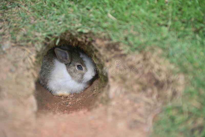 Babykonijn levend in de grondholte royalty-vrije stock afbeeldingen