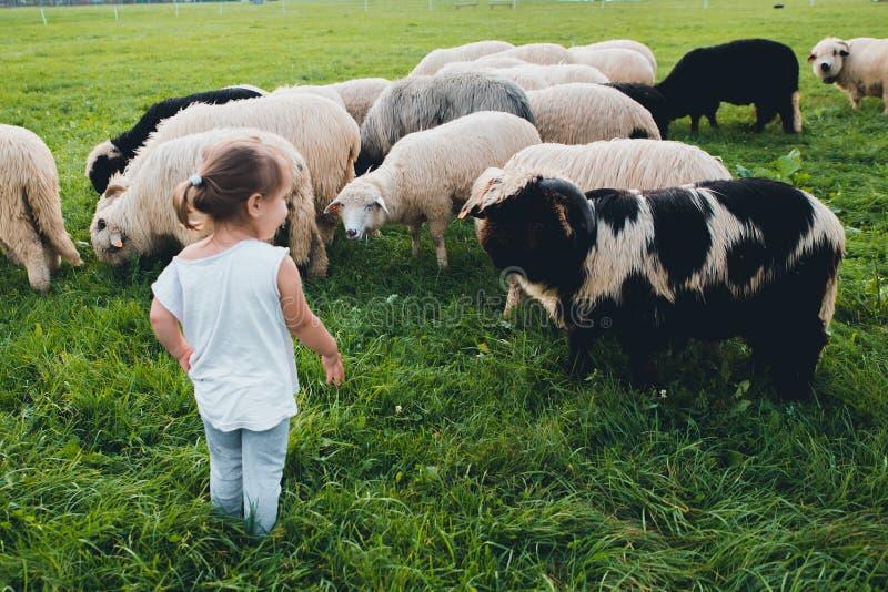 Babymeisje met schapen in groene weide royalty-vrije stock afbeelding